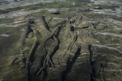 Roots (sdrusna79) Tags: radici roots acqua verde lago fondale astratto natura