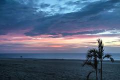 Sea Bright Sunrise (aka Buddy) Tags: 2016 summer sunrise dawn beach palm tree sand atlantic ocean seabright nj oh hdr