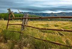 Wahkiakum County Fence 2941 A (jim.choate59) Tags: hff fence rural ruraldecay rust metal jchoate field wahkiakumcountywashington on1pics