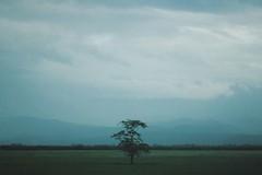 (Annie Kvijinadze) Tags: tree art nature landscape amazing beautiful clouds sky film vintage old analog explore georgia