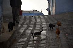 Chefchaouen (27) (jim_skreech) Tags: chefchaouen chaouen morocco ref blue cat