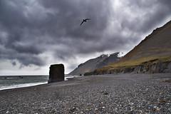 Eastern Fjords (daniel_hinrichsen) Tags: eastern fjords iceland landscape rock clouds gloom gloomy polar ocean beach bird gull mood color colorful