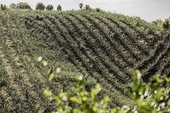Visit Sylhet for  Landscape (HamimCHOWDHURY  [Active 01 Feb 2016 ]) Tags: landscape nature green sylhet srimongol doloiteagarden gobindapur vacation redhills colorred lightandshadow rain goainghat bangladesh