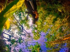 (Shahnewaz_Khan) Tags: gopro goprohero4 360 360degree actioncam landscape landscapephotography goprophotography nature trees tree leaves sunshine morning daylight wide ultrawide wideangle 360degreephoto landscapephoto colors colorfull catchycolors beautiful