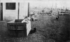 """""""The box was used as a playpen while mother was helping with the milking"""" - Eungai Creek, NSW, C.R. Jarvis (State Library of New South Wales collection) Tags: statelibraryofnewsouthwales"""
