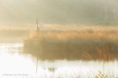 Serenity (Renate van den Boom) Tags: 09september 2016 boom europa gelderland hatertsevennen jaar landschap maand meer natuur nederland renatevandenboom zon zonsopkomst