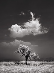 (windrides) Tags: nikon infrared nm d300 720