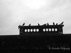 Council of the crow (Sivasankar Chidambaram) Tags: old india white building classic blackwhite team meeting balck council ready catch leader crow takeoff oldbuilding tamilnadu groups cooperation assembly teamwork coordination sivasankar