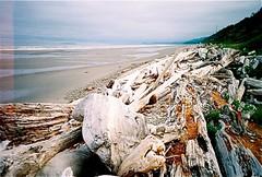 driftwood beach (adie reed) Tags: ocean wood film beach coast washington lomo driftwood olympicnationalpark