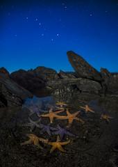 Starry Starfish (Ben Canales) Tags: ocean longexposure sea stars rocks starfish pacificocean lowtide tidalpool starrynight seastars landscapeastrophotography bencanales starfishunderthestars starfishatnight