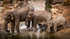 Small, medium and large. (M.W.A. Photography) Tags: elephant zoo sony chester elephants alpha a55