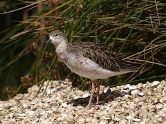 E8125606 (Megashorts) Tags: uk england bird gardens wildlife norfolk olympus e3 50200mm zuiko swd 2012 zd pensthorpe ppdcb4