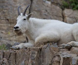 Mountain Goat Lounge