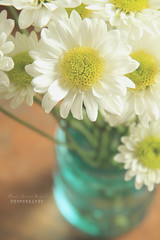 a jar o' love (.OhSoBoHo) Tags: flowers blue wedding love daisies canon vintage flora down ourwedding collection memory delicate odc ballmasonjar canoneos40d