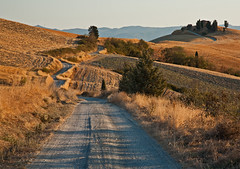 Curves of Tuscany (Peter Bros Nissen) Tags: road summer mountain tree field lines canon landscape mark farm sommer hill curves tr august tuscany 5d canon5d toscana gravel 2012 vej grus grd landskab bjerg linjer kurver canonef24105mmlusm