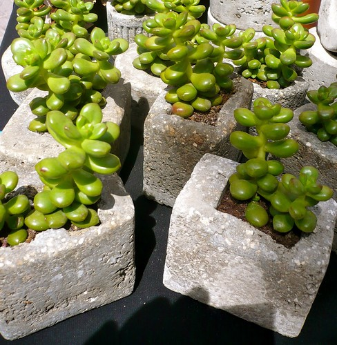 Test ciment lleuger amb planta - Maceta cemento ligero con planta