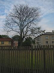 IMG_7536 (Vladislavs DOVGALECS) Tags: church guests visit latvia ventspils jelgava