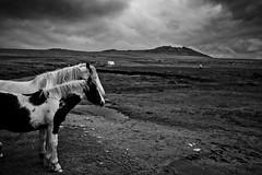 Horses on Roughtor (mplatt86) Tags: horses grass clouds cornwall tor moor moorland bodminmoor bodmin roughtor