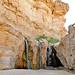 Tunisia-4071 - Mountain Oasis