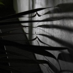 _MG_4764R Touch, Enlightenshade, Jon Perry, 19-8-12 (Enlightenshade - Jon Perry) Tags: leaves shadows touch touching 19812 gardenatnight jonperry enlightenshade touchthewall arranginglightcom 20120819