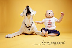 so there's a new baby photographer in town... (smalldogs) Tags: family boy red dog baby home yellow studio labrador besties homestudio todder boyanddog dogportrait 6mos childportrait studiolights babiesdogs thelittledoglaughed ldlportraits highqualitydogs