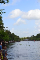 Champakkara boat race @ 2012 (Tony J Jose) Tags: vallamkali