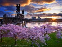 Soft Spring Sunrise (Darren White Photography) Tags: travel sky nature clouds oregon sunrise river portland landscape downtown northwest scenic bridges adventure willamette cherrytrees oregonlandscape darrenwhite darrenwhitephotography northwestlandscape landscapesofthenorthwest