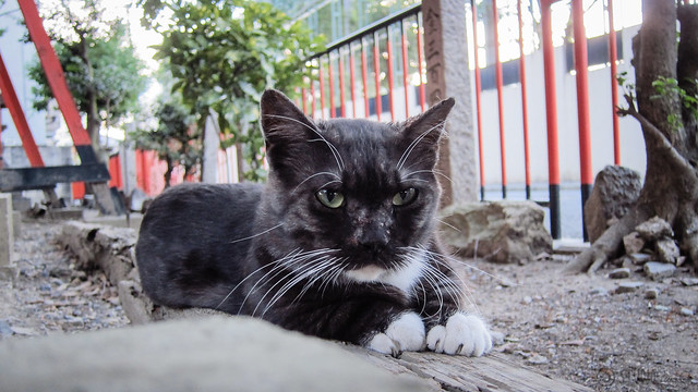 Today's Cat@2012-09-01