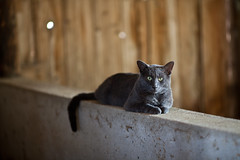 #246 (TaylorB90) Tags: wood 2 animal barn cat canon concrete prime grey aperture dof bokeh mark gray wide sharp telephoto ii l 5d 135 135l taylorbennett 5d2