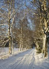 20101114_10135b (Fantasyfan.) Tags: road winter sun snow topv111 finland alley atmosphere siikajoki fantasyfanin siirretty
