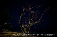 The dead Mahahual tree (1 of 2), long exposition by night (to see full screen and with light off) (Riccardo Maria Mantero) Tags: travel stella sky panorama tree nature night stars dead mexico outdoors star landscapes long natura falling trail exposition cielo iphoto albero viaggio notte morto costamaya stelle messico quintanaroo mahahual cadente mantero afsnikkor1635mmf4gedvr mayacoast riccardomantero riccardomariamantero ljsilver71