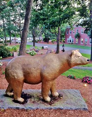 The Golden Bear (ArtFan70) Tags: bear sculpture usa art animal america ma unitedstates springfield kodiakbear goldenbear wne sixteenacres thegoldenbear americangrizzlybear westernnewenglanduniversity stgermaincampuscenter