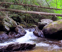 Virginia Creeper Trail Stream (Cindy DeVore) Tags: southwestvirginia streamsandrivers jeffersonnationalforest mountrogersnationalrecreationarea virginiafishing grindstone090113