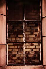 window (dax46407) Tags: decay urbex 50mmf18 garyindiana citymethodistchurch