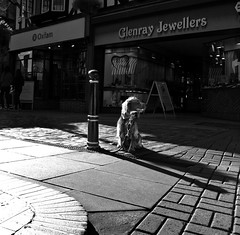 266/365 (TheGriefmeister) Tags: dog abandoned canon alone 7d spaniel 365 cobbles hertfordshire hitchin oxfam herts jewellers project365 266365 elementsorganizer