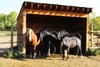 """Four Rock Ledge Ranch Equines • <a style=""""font-size:0.8em;"""" href=""""http://www.flickr.com/photos/64712918@N06/8017124390/"""" target=""""_blank"""">View on Flickr</a>"""