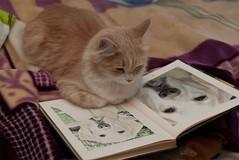 """PhotoFunia:   """"Cat looking at Saxon"""""""