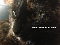 2016 - Esmeralda close up for 07.27.16 post (Terre's Photos) Tags: smokeyandesmeralda thedancingcat catadoption picturesofcats catparents danceexercise terrepruitt niateacher niabluebelt cpt sanjosenia sanjoseniaclasses sanjoseexerciseclasses wwwhelpyouwellcom wwwterrepruittcom sanjoseniateacher piyo pilates yoga exercise workout sanjoseworkout niasanjose danceexerciseclass danceworkout cardiodance groupexclasses ymca nia niaclass niatechnique sjcityfit