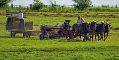Amish Hay Baling (Jeff Clow) Tags: 2016 amish august buchanancounty iowa usa outdoors outside summer teamwork hardwork afternoon lateafternoon rural farm farming work manuallabor horses haybaling oldfashioned americana
