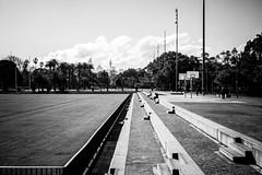 Redfern Park (Albion Harrison-Naish) Tags: redfern sydney newsouthwales nsw australia sydneystreetphotography streetphotography street albionharrisonnaish park redfernpark olympus olympusem5 em5 lumixg20f17ii