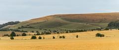 Fyfield Down - #7 July (stevedewey2000) Tags: landscape wiltshire fyfielddown salisburyplain valeofpewsey pewsey countryside fields downs downland crop harvest ripe orange yellow sigma70300g explore explored