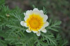 Flower (drbraikeet) Tags: