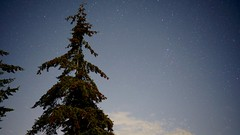 Camping in September: cones on the trees and stars in the sky (planted city) Tags: saltspringisland gulfislands britishcolumbia bc beautiful nature vitaminn sky clouds stars starry night lookup getoutside explore earth space trees vancouver canada pnw island islands camping rucklefarm