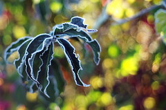 frost (SS) Tags: ss pentax k5 bokeh autumn lazio italy countryside frost smcpentaxm50mmf17 fall colors depthoffield plant 2015 contrast warm cold morningwalk