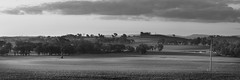 Fields_Of_Green_B+W (Beetwo77) Tags: nsw cowra central western slopes rural farm fields wheat sunset fuji xt1 90mm pano panorama reminder