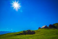 Musenalp in Switzerland (christophjkonrad) Tags: musenalp nidwalden niederrickenbach alps summer switzerland cows