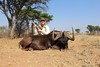 Namibia Plainsgame Hunt - Kalahari Desert 24