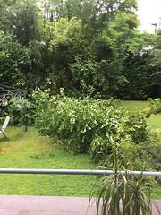 Sturmschaden Baum (dronepicr) Tags: hausrat versicherung bäume sturmschäden sturmschaden sturm foto photo