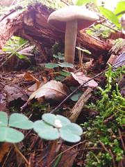 IMG_20160831_115301 (Alisa Jahary) Tags: nature forest mushroom mushrooms micology photo