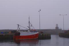KY 985 (b16dyr) Tags: mist scotland fife pittenweem scotchmist fifecoastalwalk seaharr seahar pittenweemharbour